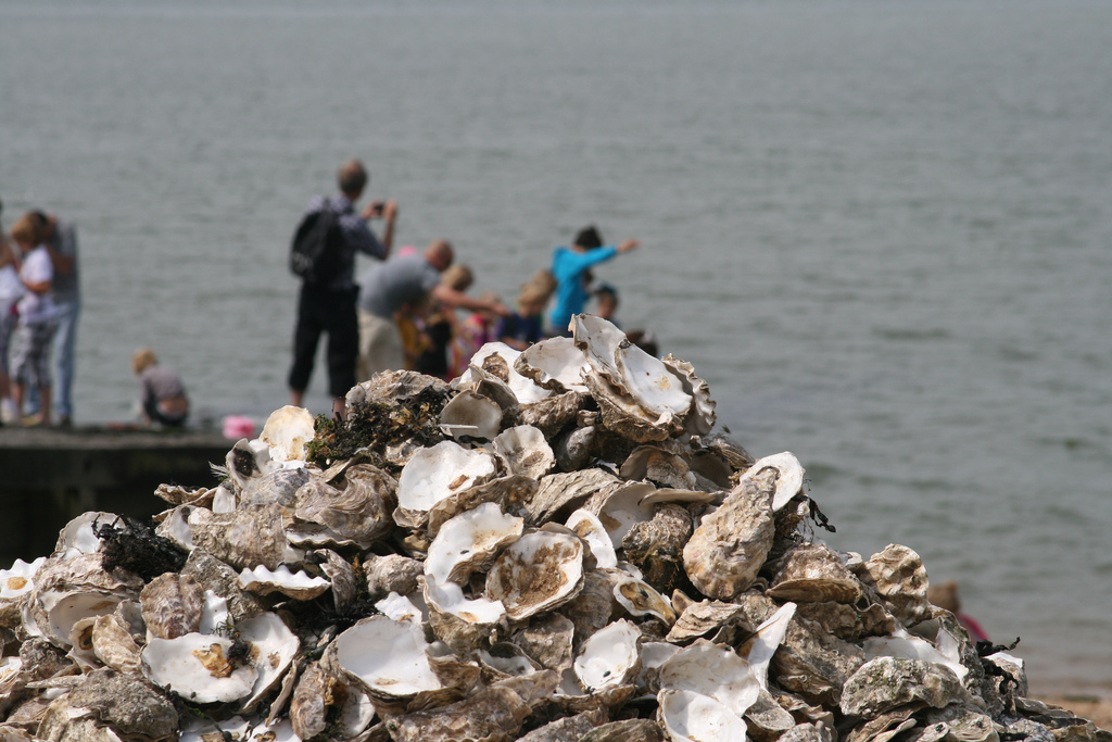 Photo of discarded oyster shells by Neil Baker