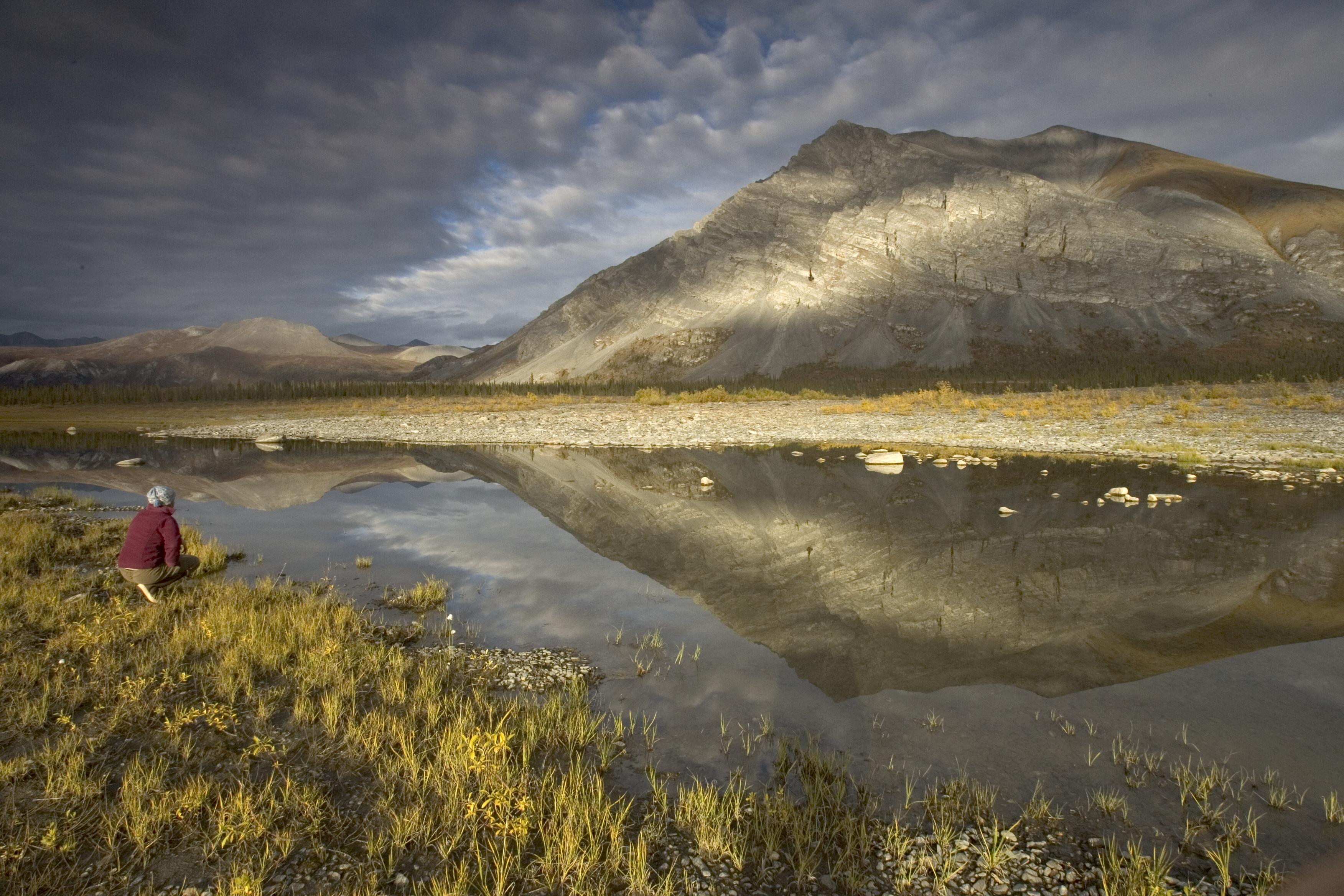 The Arctic National Wildlife Refuge in Alaska is among the scores of places scientists have been able to understand better because of the NatureServe Climate Change Vulnerability Index. | Photo by Hillebrand/USFWS