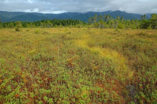 Rare bog discovered by NatureServe Network | Photo by Joe Rocchio
