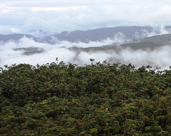 The Yungas rain forest, Peru. Photo courtesy of ECOAN.