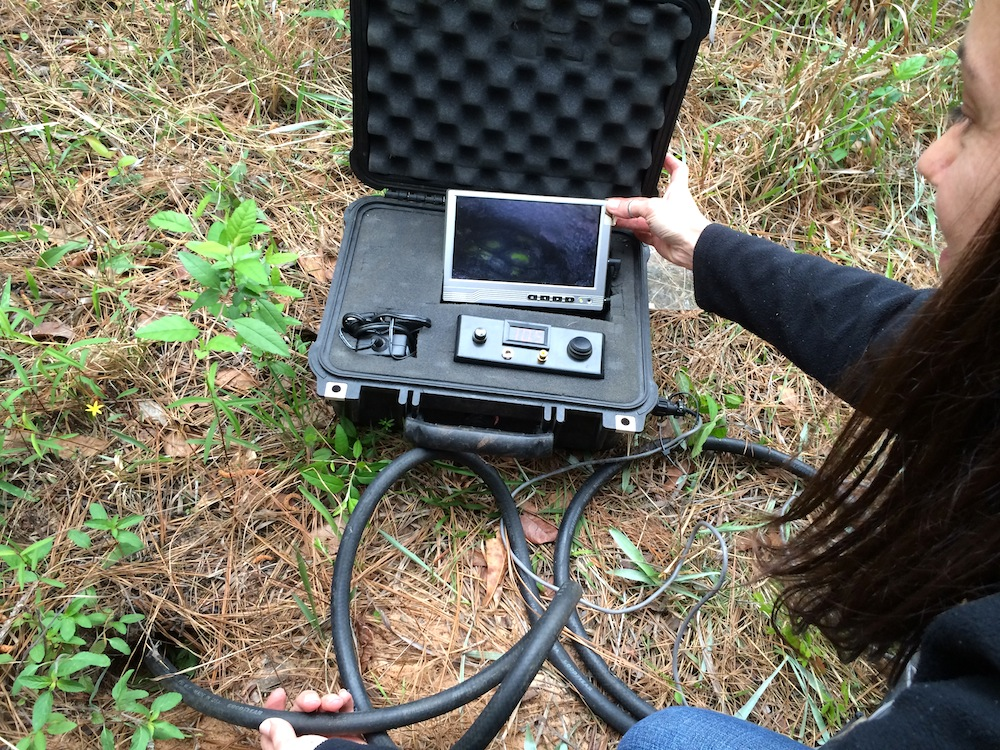 Keri Landry of the Louisiana Natural Heritage Program uses a burrow camera to spy on a baby gopher tortoise (Gopherus polyphemus). Photo by Margaret Ormes | NatureServe