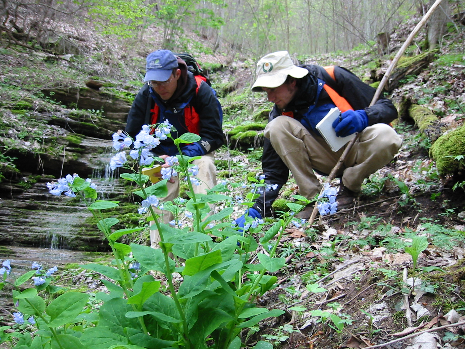 David Richert from the Virginia Division of Natural Heritage Program identifies sensitive habitats in Southwest Virginia  | Photo by Irvine Wilson
