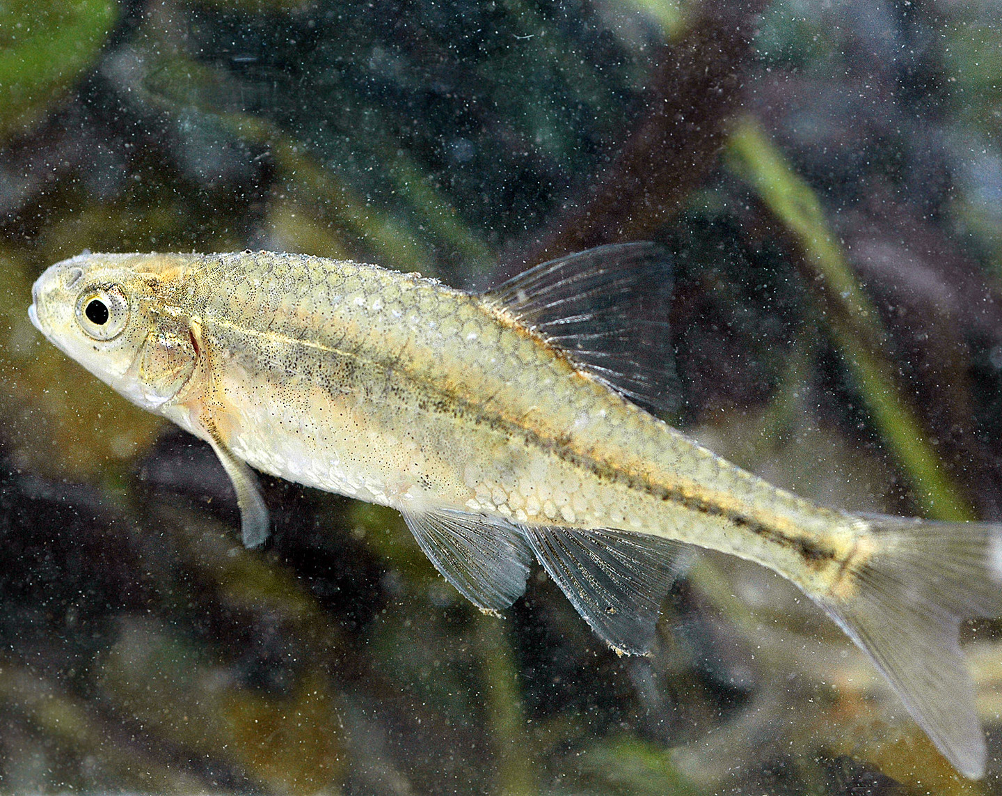 Freshwater fish diversity - Although Freshwater Fish Diversity Peaks In The Tropics The U S Nonetheless Hosts The