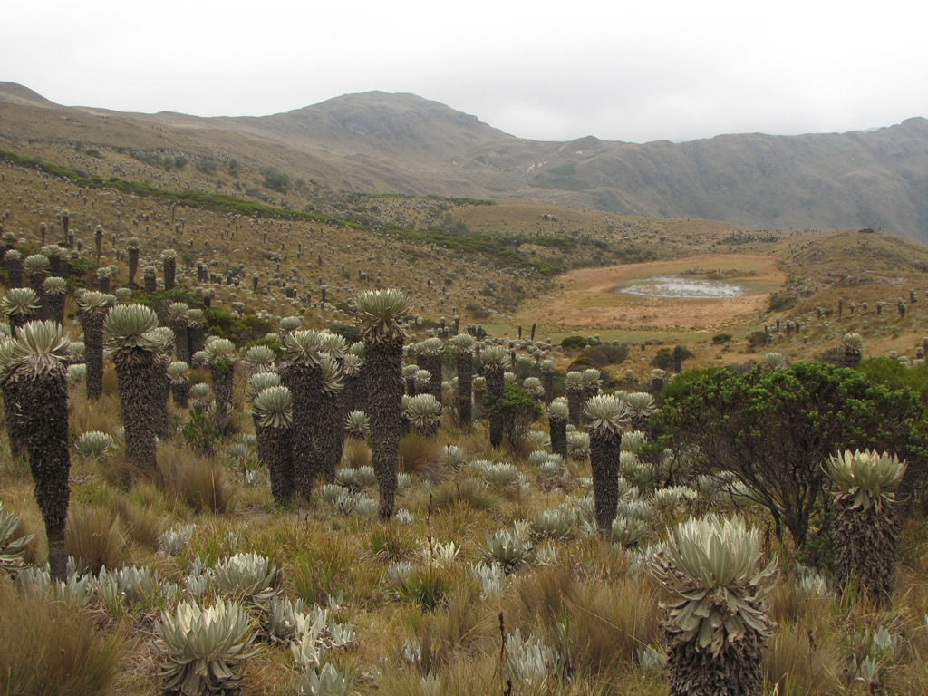 Land managers can use the Model to identify key vulnerabilities of Andean ecosystems (such as this Colombian páramo) for input into climate adaptation planning exercises. Photo by Bruce Young.