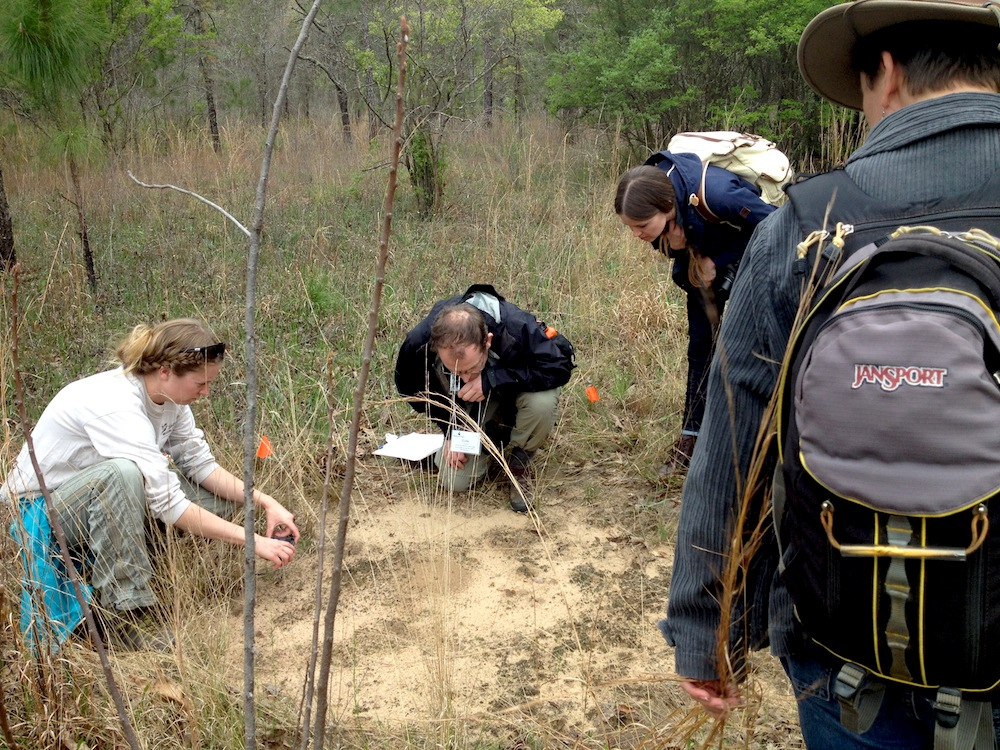Core Methodology Training in the field - looking at a gopher tortoise burrow. Photo by Shara Howie | NatureServe