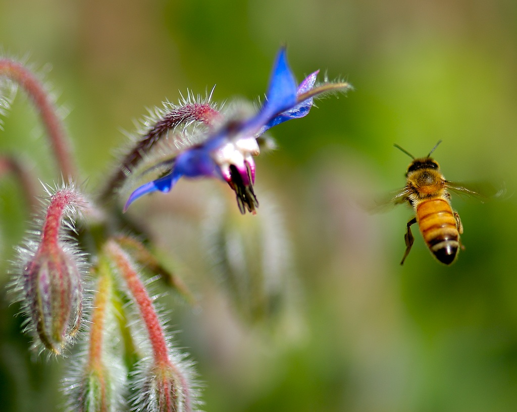 NatureServe is urging the White House to promote the inclusion of plants and their pollinators in State Wildlife Action Plans, many of which will be re-written by next year. Photo by Danny Perez Photography