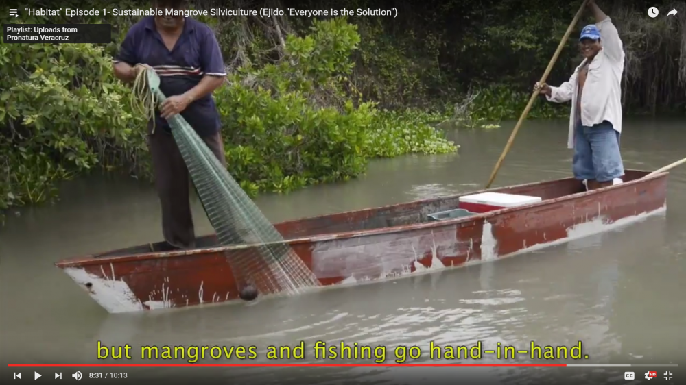 Watch the video to hear stories of Pablo, Olegario and others and how sustainable management of mangroves has changed their lives and livelihoods