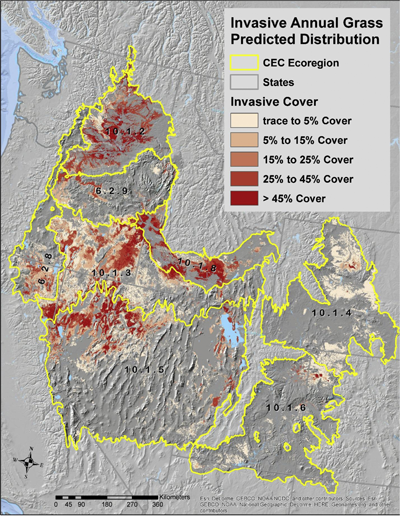 Invasive annual grass presence by canopy cover category across cold desert ecoregions.