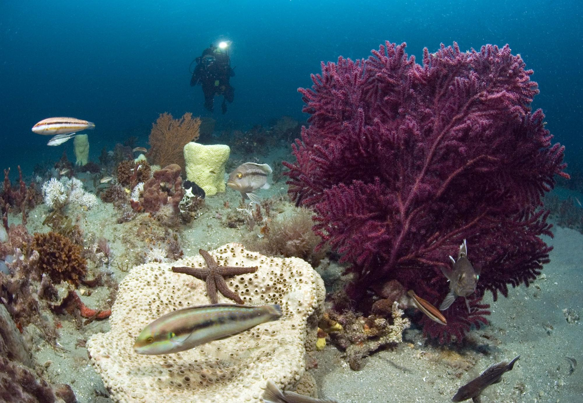The EBM Tools Network focuses on helping its members protect coastal and marine biodiversity. Photo by Greg McFall