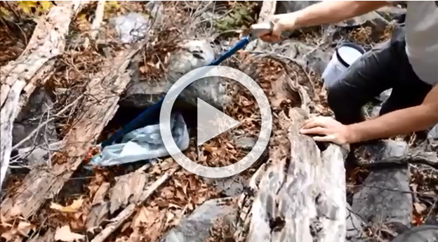 The Vermont Natural Heritage Inventory shares this video of tagging and assessing the health of a critically imperiled species in their state.