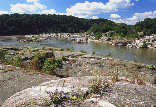 Sparsely vegetated metagraywacke and schist on bedrock terrace along the Potomac River below Great Falls, VA.